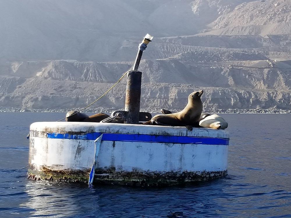 iexspeedboat2
